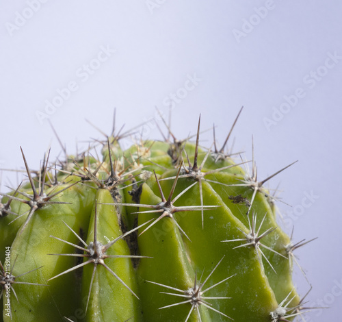 Foto op Canvas Cactus Close Up of A Spiky Cactus Plant with Plain Background