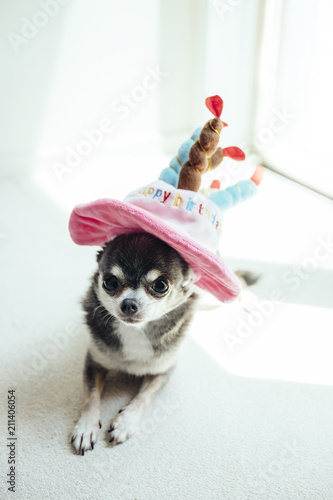 A Dog Wearing Hat In The Shape Of Birthday Cake Is Lying Down