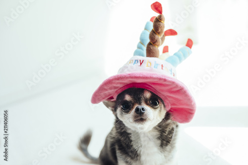 A Dog Wearing Hat In The Shape Of Birthday Cake Is Sitting And Watching