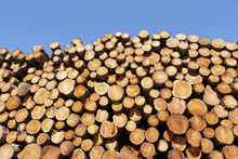 Chopped Wood Logs Stacked In F...