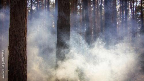 Valokuvatapetti Smoke in the woods, the rays of the sun illuminate the smoke