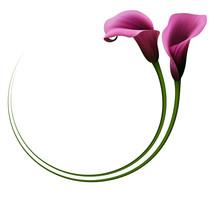 Realistic Violet Calla Lily, C...