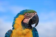 Parrot Portrait Photograph, Si...