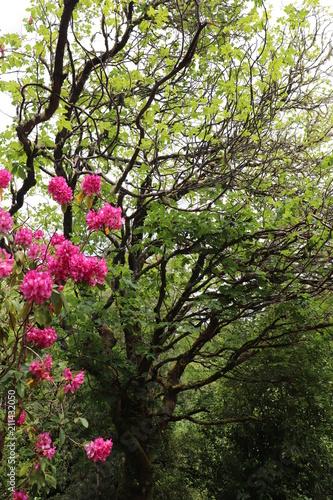 Photo Irlande - Anneau de Beara - Ile de Garinish -