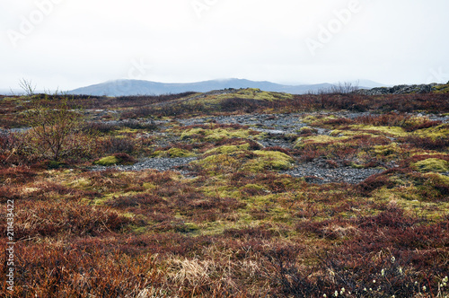 Fotobehang Wit beautiful nature of Iceland, volcanic landscape covered with moss