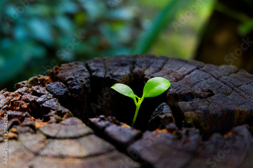 plant growing out of tree stump