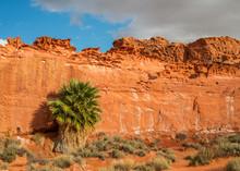 Washington Palm Oasis, Little Finland, Gold Butte National Monument