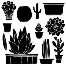 Cacti, Houseplants, Flowerpots, Boxes