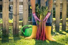 Gardener In Yellow Wellies Hol...