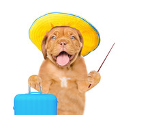 Happy Puppy In Summer Hat Holds Suitcase And Pointing Stick. Isolated On White Background