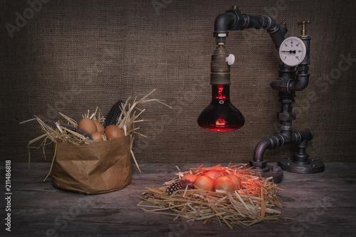 Valokuva  Eier ausbrüten