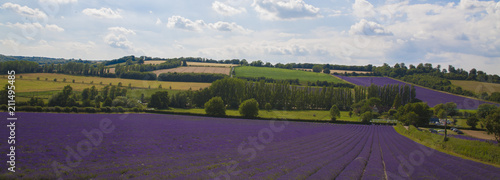 Foto op Aluminium Aubergine English Lavender Fields