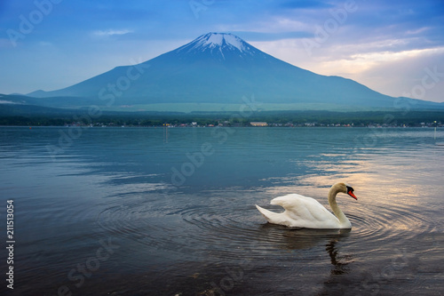 Tuinposter Zwaan Swan swimming in Yamanaka lake, Japan