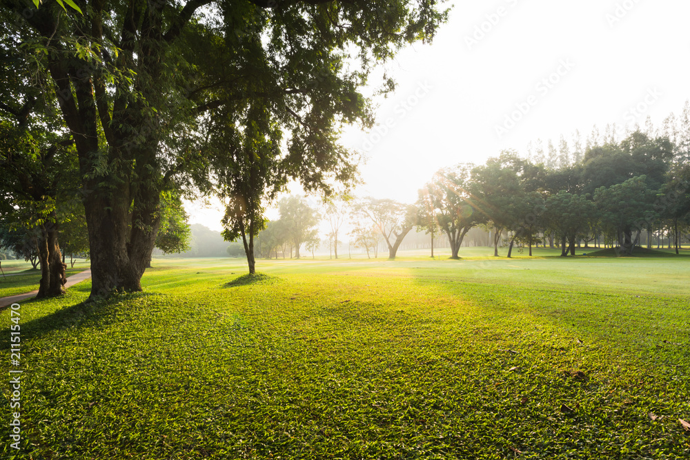 Fototapety, obrazy: Scenery green garden and meadow in morning with coconut tree palm, Wonderful sunbeam at the natural park