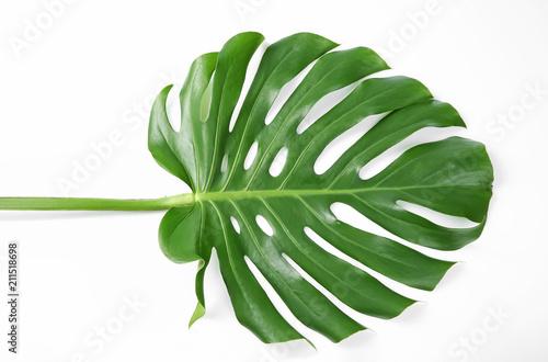 Fototapeta Tropical Monstera leaf on white background obraz na płótnie