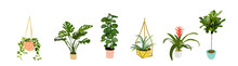 Potted Plants Collection Set. Succulents And House Plants. Hand Drawn Vector Art.  Set Of House Indoor Plant Vector Cartoon Doodle.