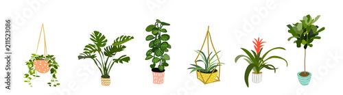kolekcja roślin doniczkowych. sukulenty i rośliny domowe. ręcznie rysowane grafiki wektorowej. Zestaw domu kryty roślina wektor kreskówka doodle.