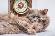 A Fluffy Lazy Cat Lies Near The Clock. It's Time To Get Up And Go To Work_