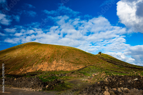 Tuinposter Canarische Eilanden Lanzarote countryside spring landscape view with one palm tree and walls build by piling up black volcanic stones