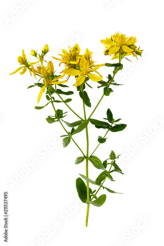 Photo  Branch of St. John's wort isolated on white background