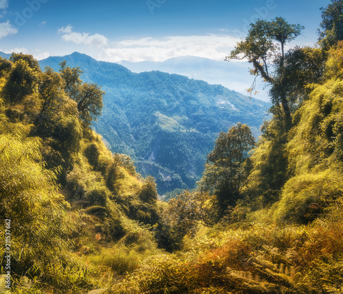 Tropical Forest On The Mountain At Sunset In Autumn