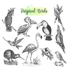 Exotic Tropical Birds Vector Hand Drawn Parrot. Sketch Style Toucan, Flamingo, Cockatoo. Vector Isolated Bird