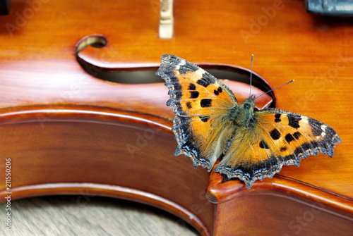 Tuinposter Vlinders in Grunge violin and butterfly. butterfly large tortoiseshell. close up.