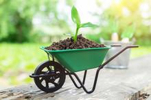 Small Garden Wheelbarrow With Growing Seedling In The Soil.