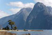 Clump Of Trees On A Spit Of Land Encroaching Into Milford Sound, New Zealand. High Mountains In The Background.