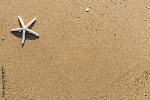 Dried starfish on the beach background Canvas Print