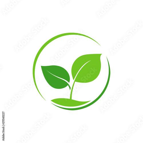 Photo Green leaf logo. Vector.