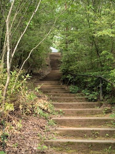 In de dag Weg in bos 静かな森の小道