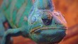 portrait of a funny adult chameleon closeup