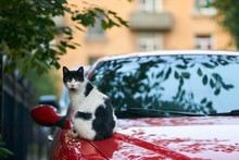 The Street Cat Is Warmed Is Si...