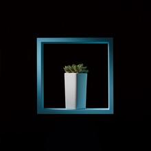 Mini Succulent Echeveria In A Tall White Flowerpot In A Blue Wooden Frame On A Dark Background