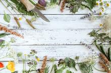 Wildkräuter Wild Kräuter Gartenkräuter Brett Tisch Verschiedene Gewürze Wilde Essbare Blüten Blätter