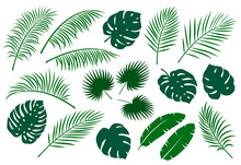 Set Of Green Palm Leaves