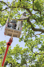 Man Fights Oak Procession Caterpillars In The Aerial Platform
