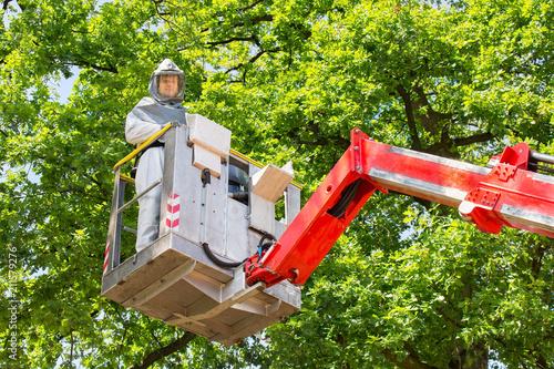 Man fighting oak procession caterpillars in aerial platform