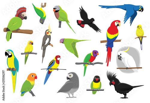 Valokuva  Various Parrots Cartoon Vector Illustration