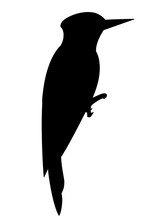 Black Silhouette. Woodpecker Bird. Flat Cartoon Character Design. Black Bird Icon. Cute Woodpecker Template. Vector Illustration Isolated On White Background