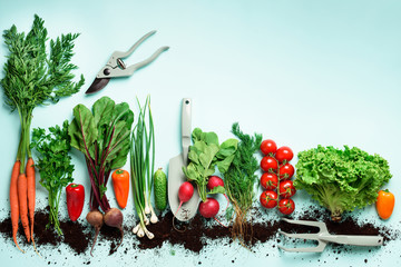 Organic vegetables and garden tools on blue background with copy space. Top view of carrot, beet, pepper, radish, dill, parsley, tomato, lettuce. Veggies growing in soil. Vegan, eco concept