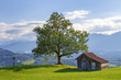 Allgäu - Alpen - Stadel - Baum - Sonthofen - Hindelang