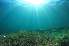 Underwater Sea Grass And Blue ...