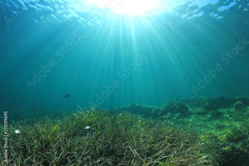 Staande foto Zee / Oceaan Underwater sea grass and blue ocean