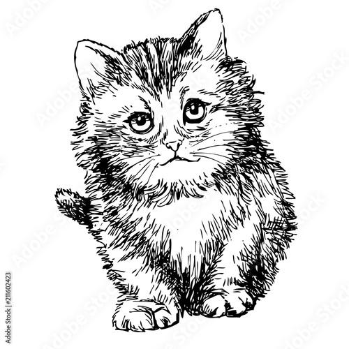 Photo sur Toile Croquis dessinés à la main des animaux lovely kitten hand drawn