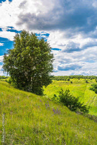 Idyllic summer landscape - Birch on a hillside, rolling hills and beautiful clouds on the horizon