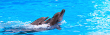 Two Dolphins In The Pool, Dolphinarium, Banner