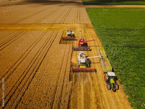 Fotografía  Early morning harvest