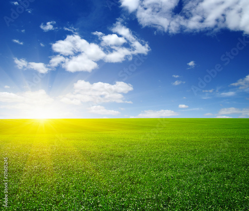 Spoed Foto op Canvas Weide, Moeras Green meadow under sun